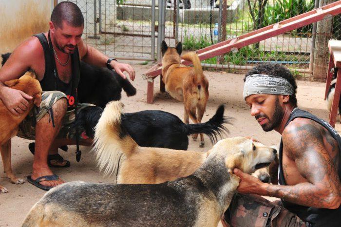 take care dog at foundation