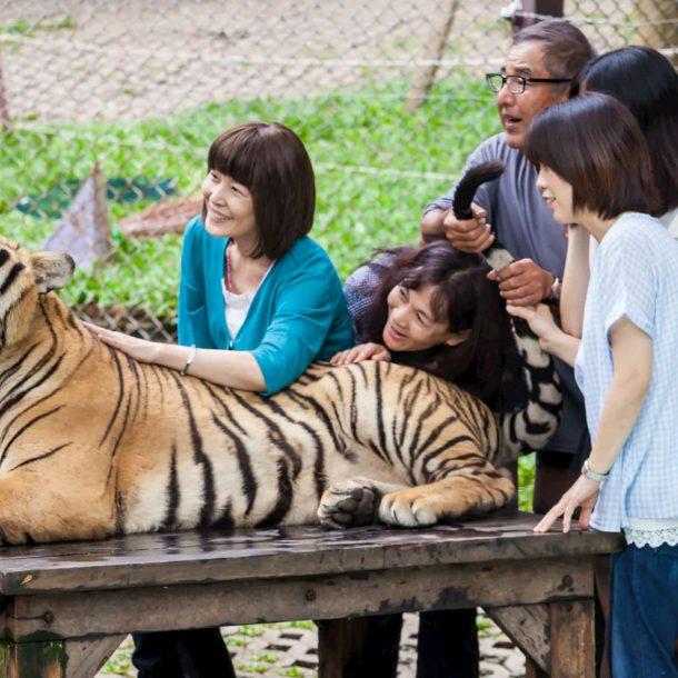 Tiger Kingdom Insel Phuket