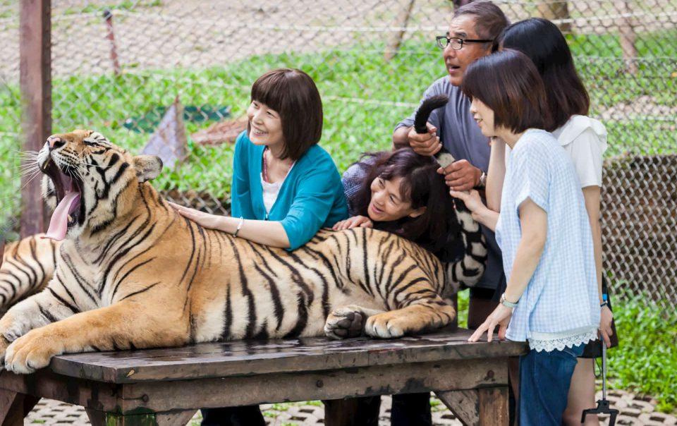 Tiger_kingdom_Phuket