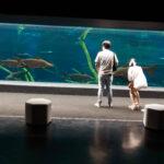 Aquarium in Phuket